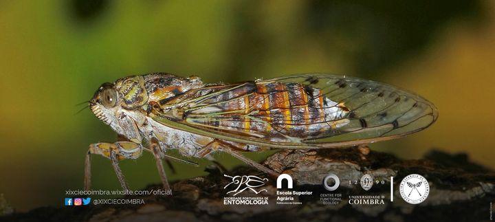XIX Congresso Ibérico de Entomologia - data a definir