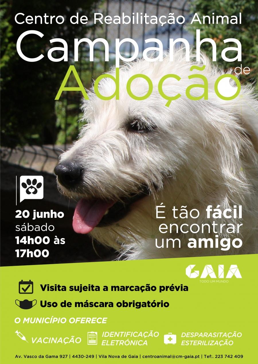 Campanha de Adoção Animal