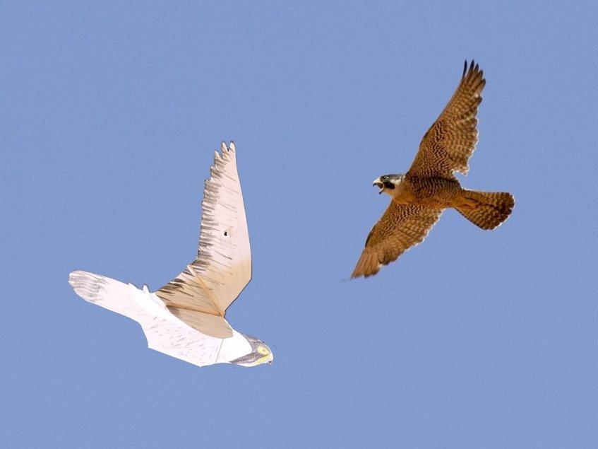 Aves da Foz do Sizandro