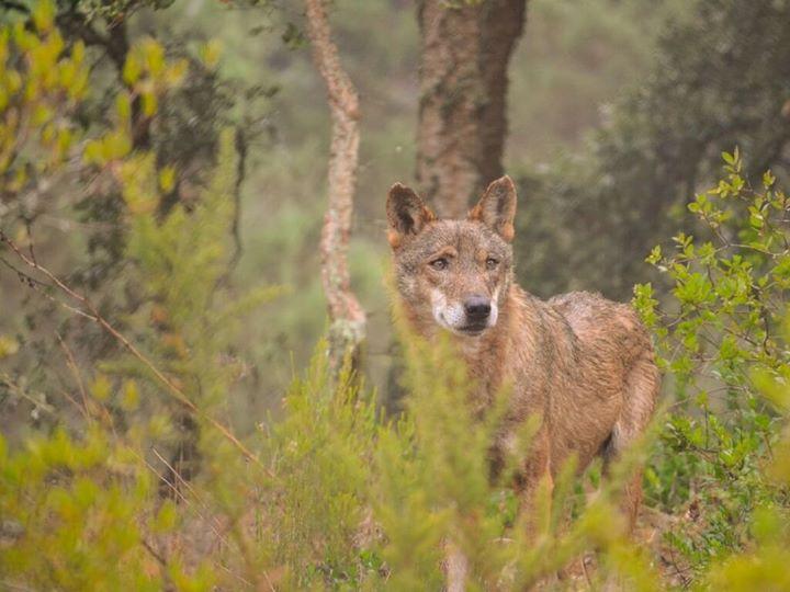 Visita ao Santuário dos Lobos & Caminhada