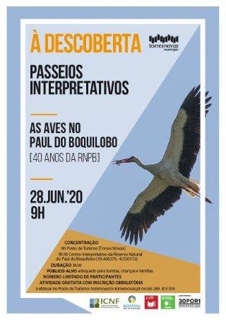As aves do Paul do Boquilobo | À Descoberta – passeios interpretativos