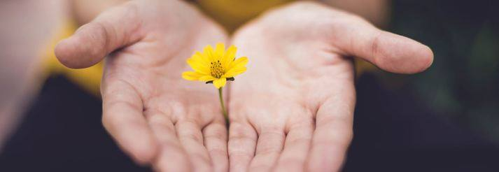 budismo no quotidiano | curso online