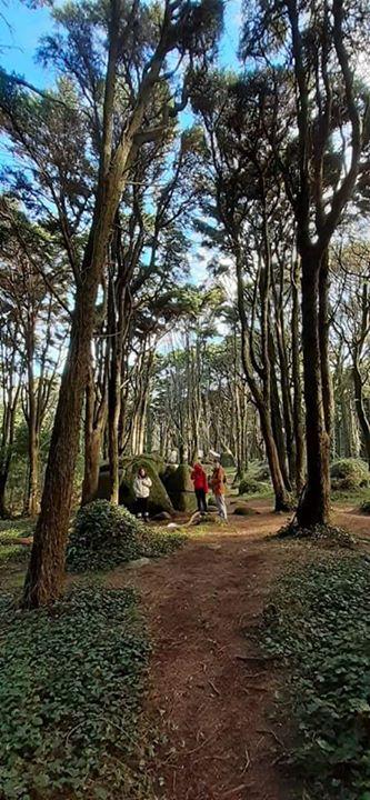 Caminhada de Reconexão | Serra Sintra