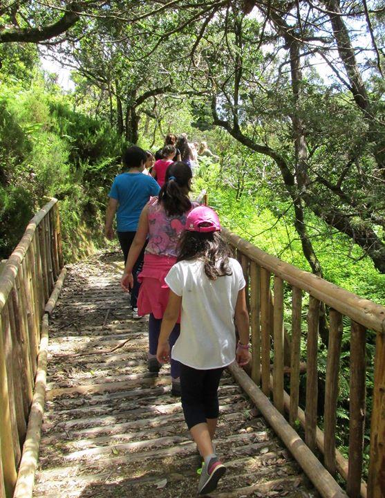 Ciência Viva no Verão -À Descoberta da Laurissilva