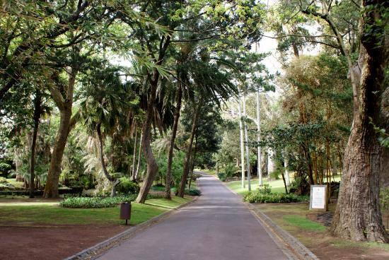 Roteiro das Plantas de Ponta Delgada (Esgotado)
