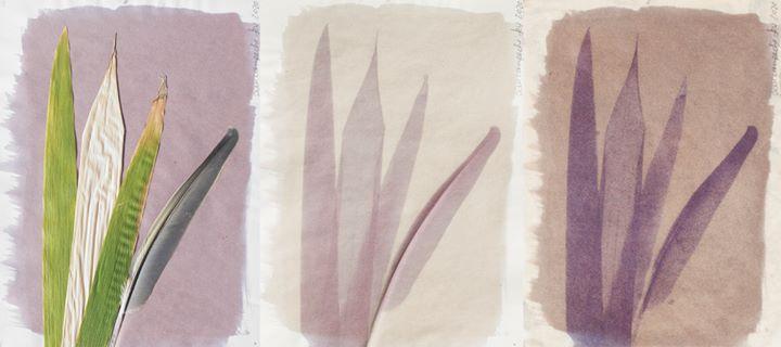 WS Antotipia - Fotografia com Pigmentos Naturais