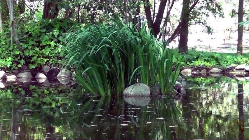 Visita Guiada al Jardín Botánico de Coria