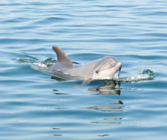 Caminhando entre Golfinhos