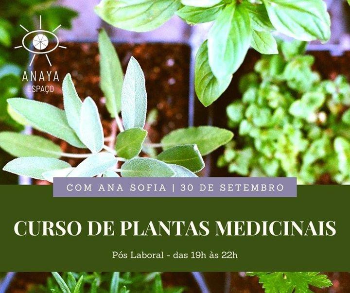 Curso de Plantas Medicinais/ Ana Sofia Silva