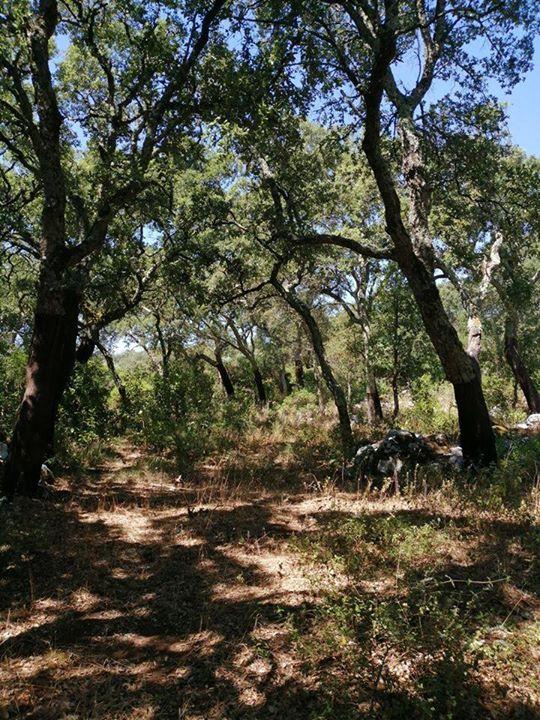 Caminhada com estórias Beatriz, a árvore feliz