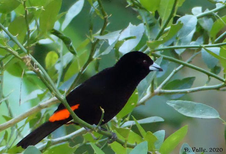 Charla 'Monitoreo de aves como bioindicadores'