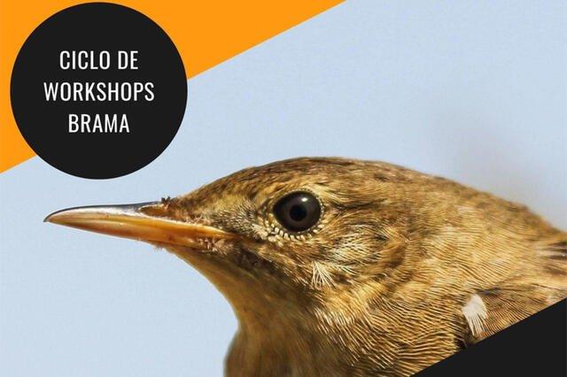 Aves: Biologia e Amostragem