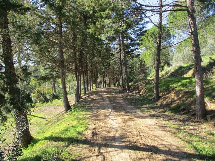Caminhando em Miradouros do Tejo
