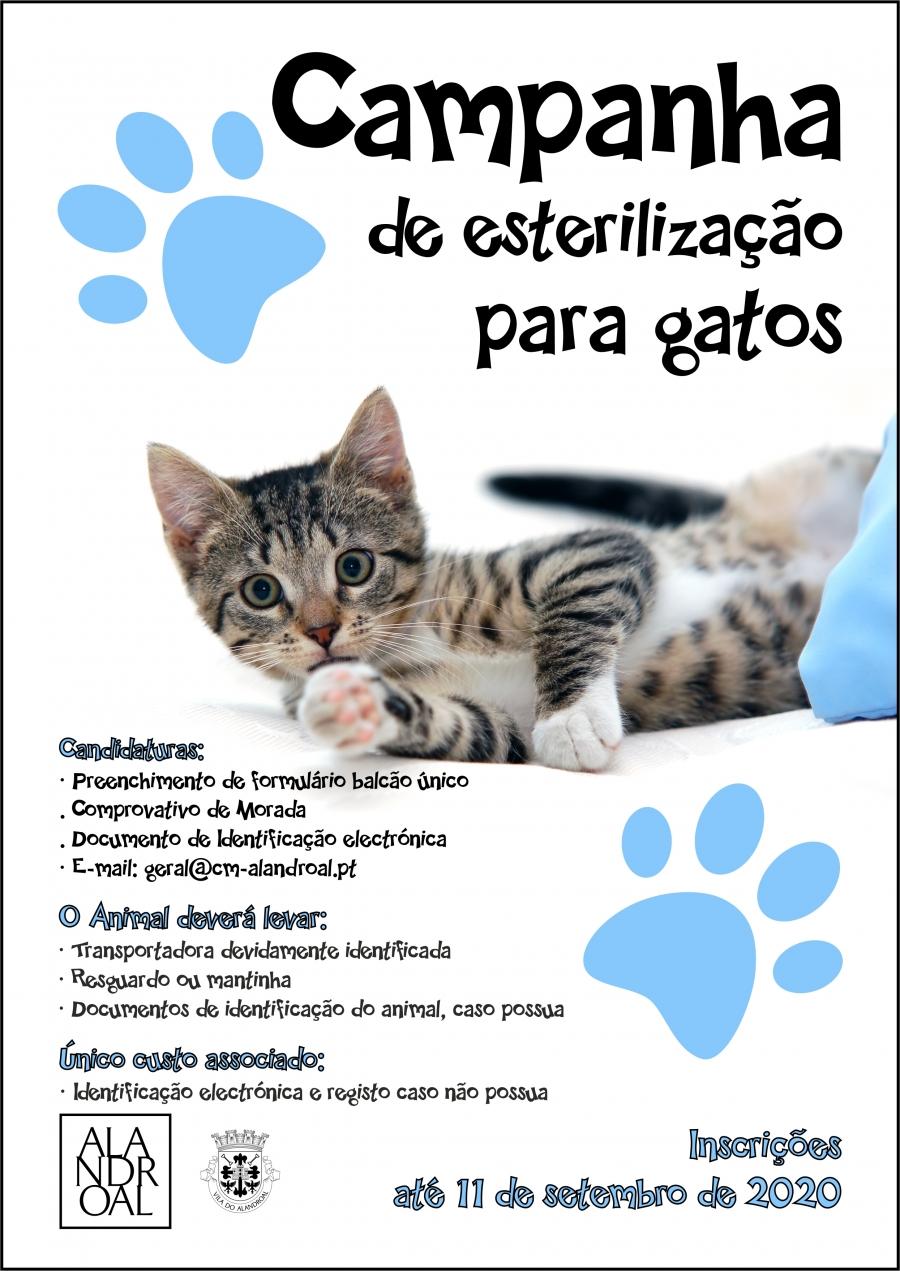 Campanha de Esterilização para gatos