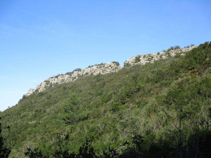 Caminhando na protecção do Castelo dos Mouros - Arrábida