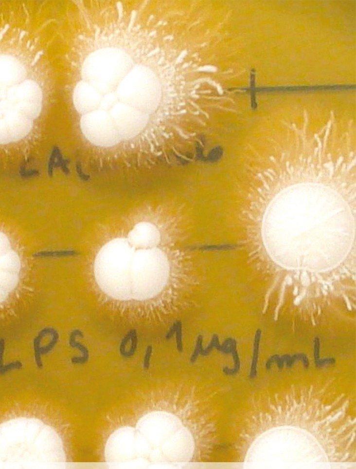 """Exposição """"Microrganismos de Estimação"""""""