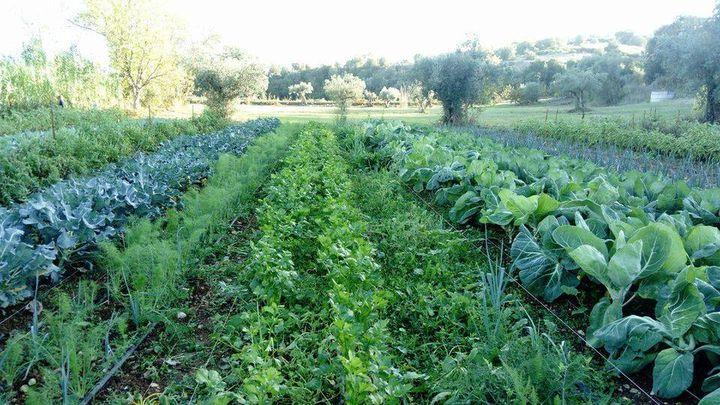 Horta Bio: Passo a Passo