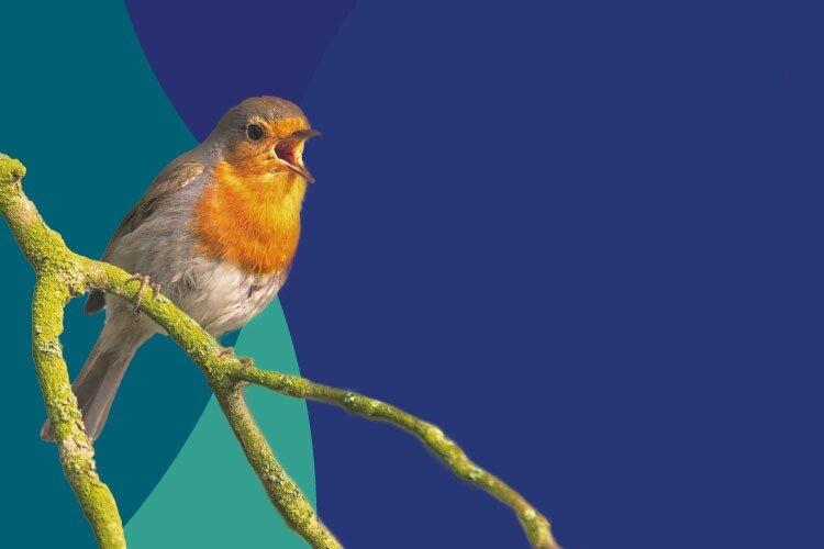 À descoberta do fantástico mundo do canto das aves