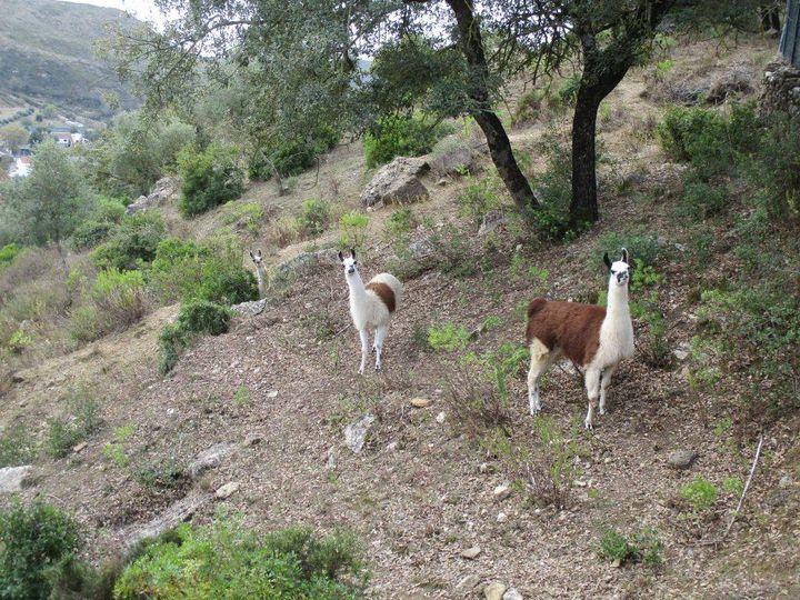 Caminhando no Vale da Calhandriz