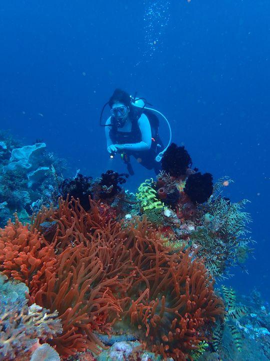 Curso de mergulho - Open Water Diver