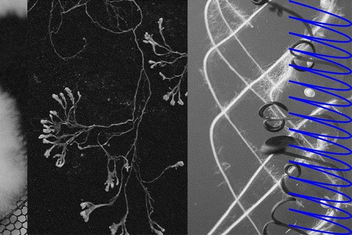 Living Sytems Lab | A symposium by Central Saint Martins – UAL
