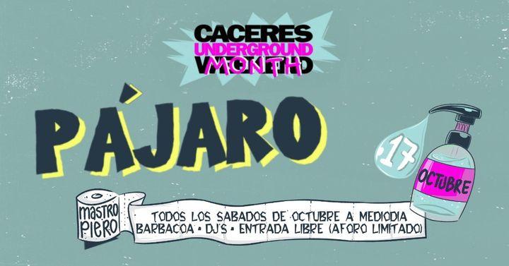 Pájaro / 17 Octubre 2020 / Cáceres