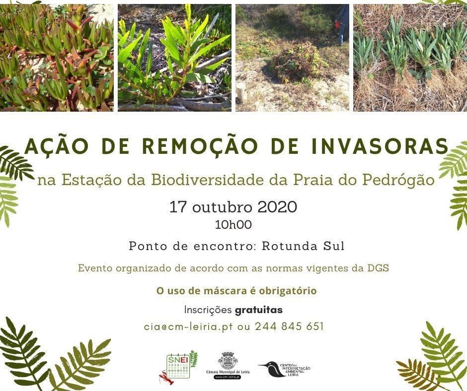 Ação de remoção de invasoras na Estação da Biodiversidade da Praia ...