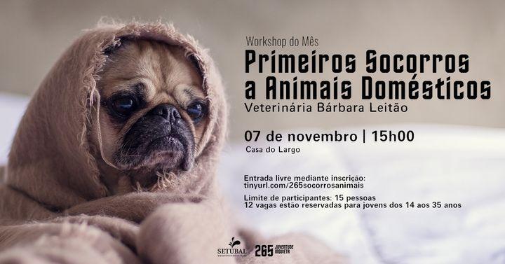 Workshop do mês: Primeiros Socorros a Animais Domésticos