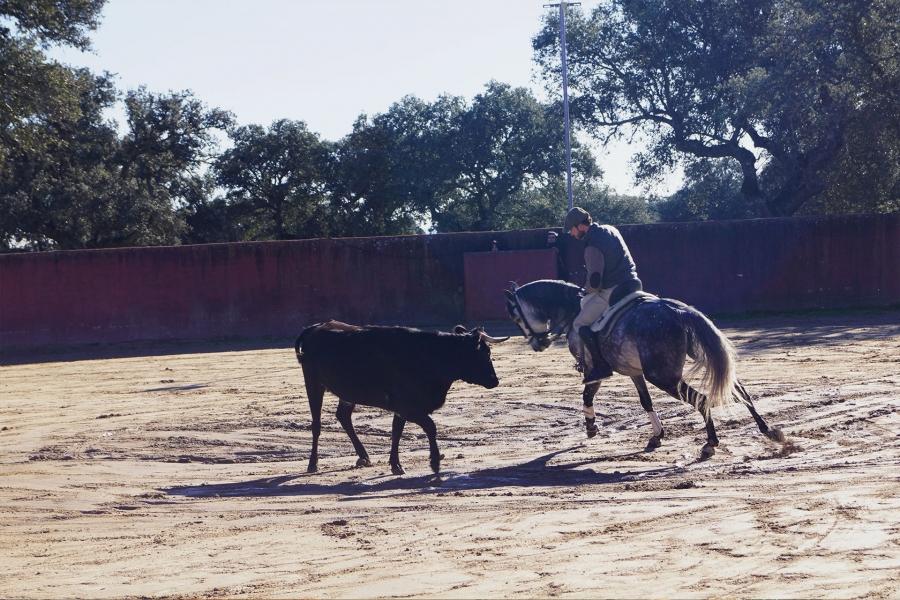 Descubre el toro y el caballo en la dehesa