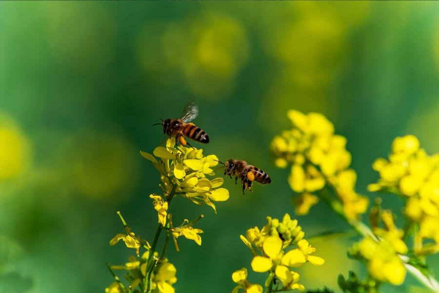 Taller para descubrir el mundo de las abejas