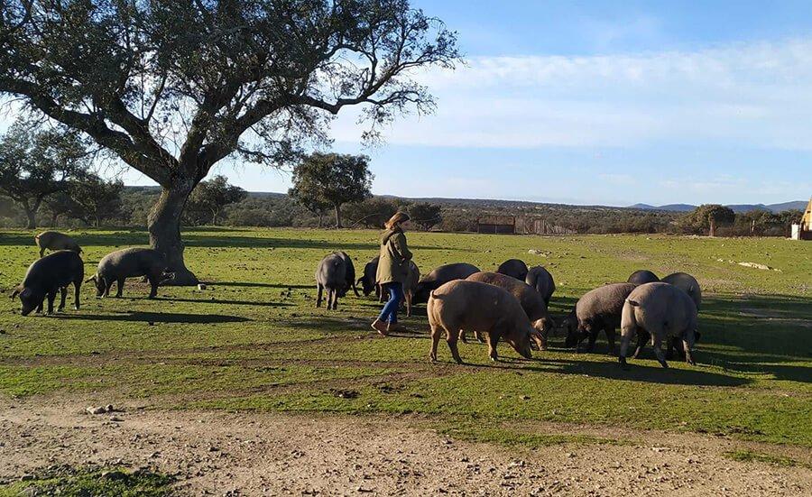 Visita guiada a una ganadería extensiva