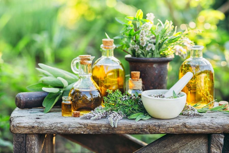 Ruta botánico-medicinal por la dehesa