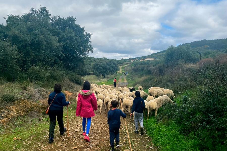 Ruta de pastoreo para niños y taller de trashumancia