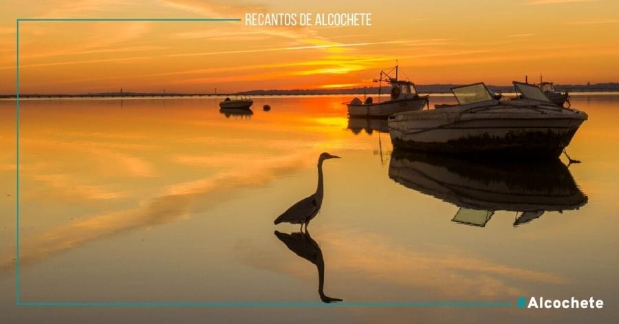 Exposição 'Recantos de Alcochete' é inaugurada ...