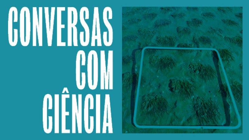 As múltiplas facetas das ervas marinhas na mitigação de impactes globais