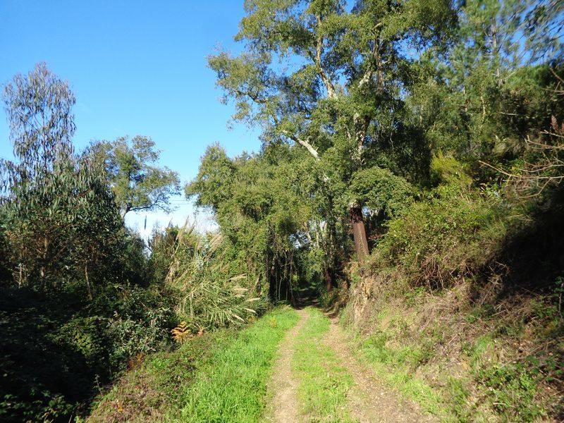 Caminhando nas Encostas da Tapada
