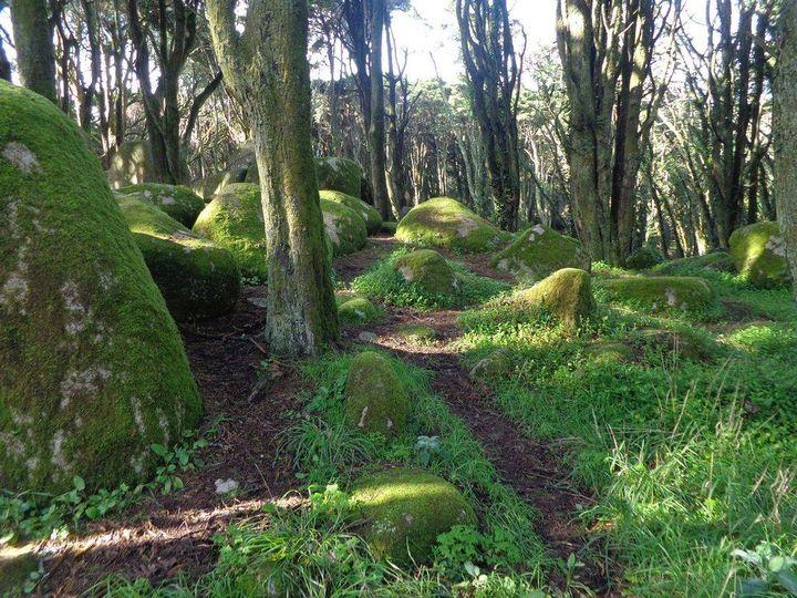 Caminhando em Bosques da Peninha
