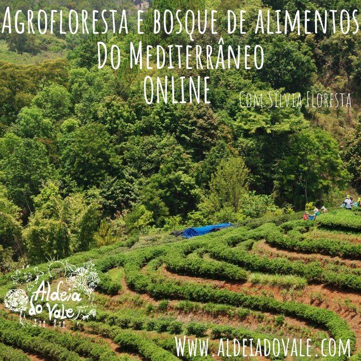 Agrofloresta e Bosque de alimentos do Mediterrâneo com Sílvia Floresta