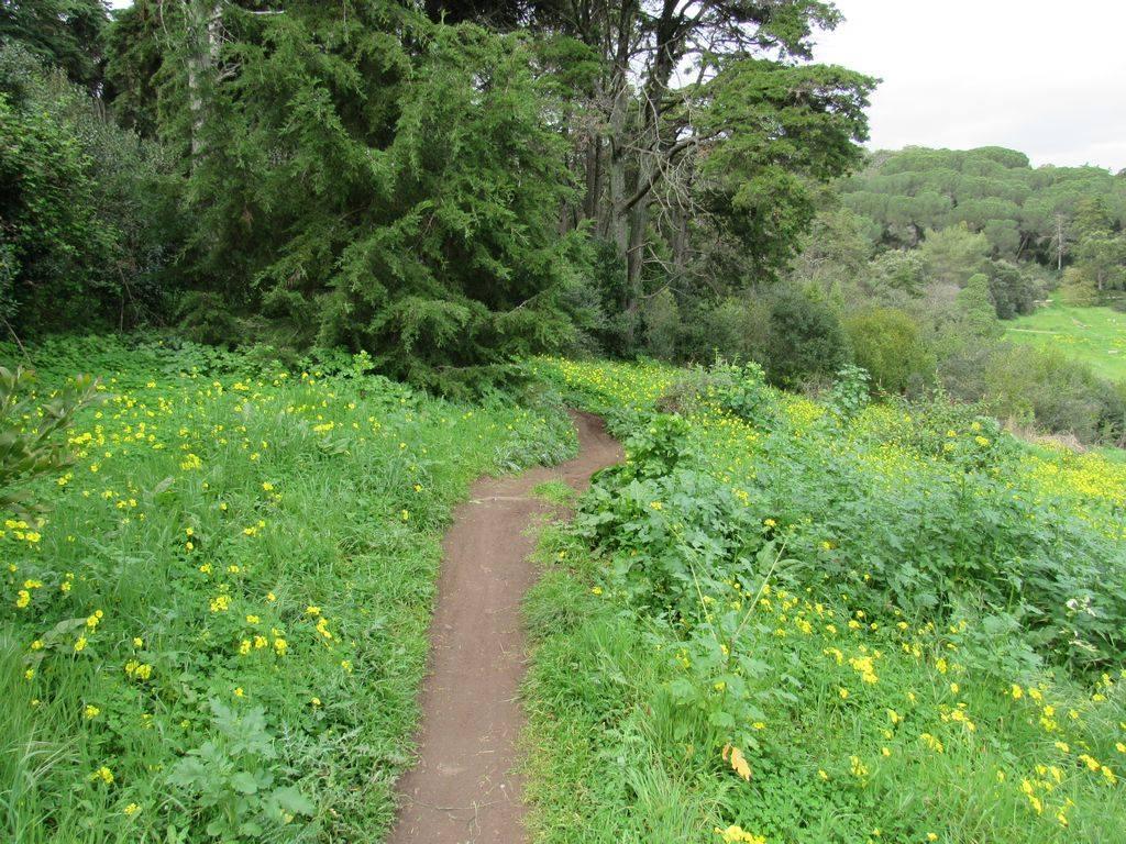 Caminhando no Corredor Verde de Monsanto