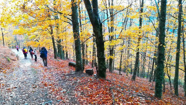 Rota das Faias – Outono na Serra da Estrela