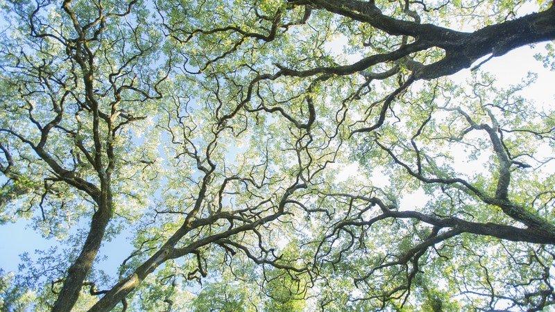 (Re)Pensar a Floresta