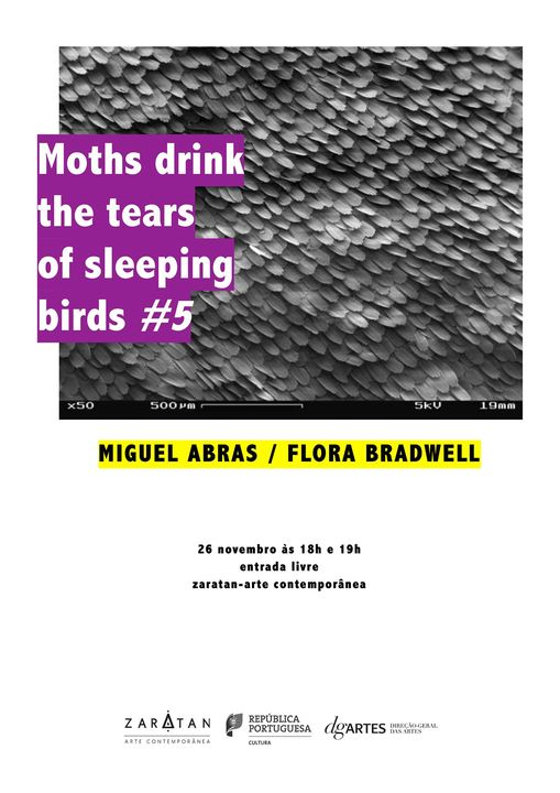 Moths drink the tears of sleeping birds #5
