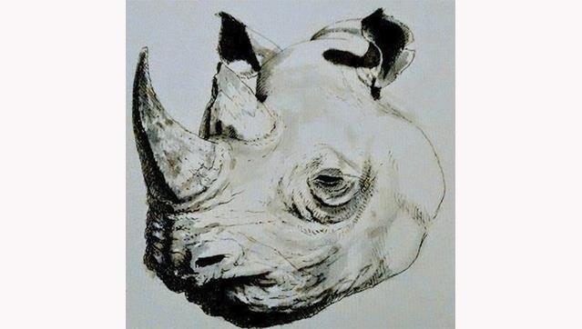 Ensaio Aberto com The Last Black Rhino /\ SHE