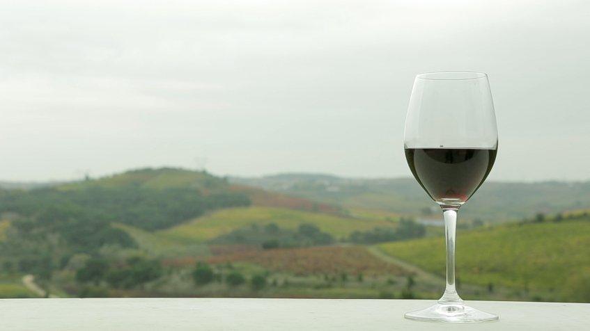 Diálogos com Vinho