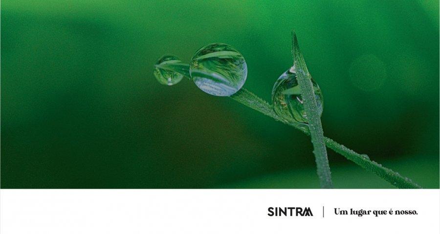 Sintra promove webinar sobre o impacto ambiental dos resíduos invisíveis
