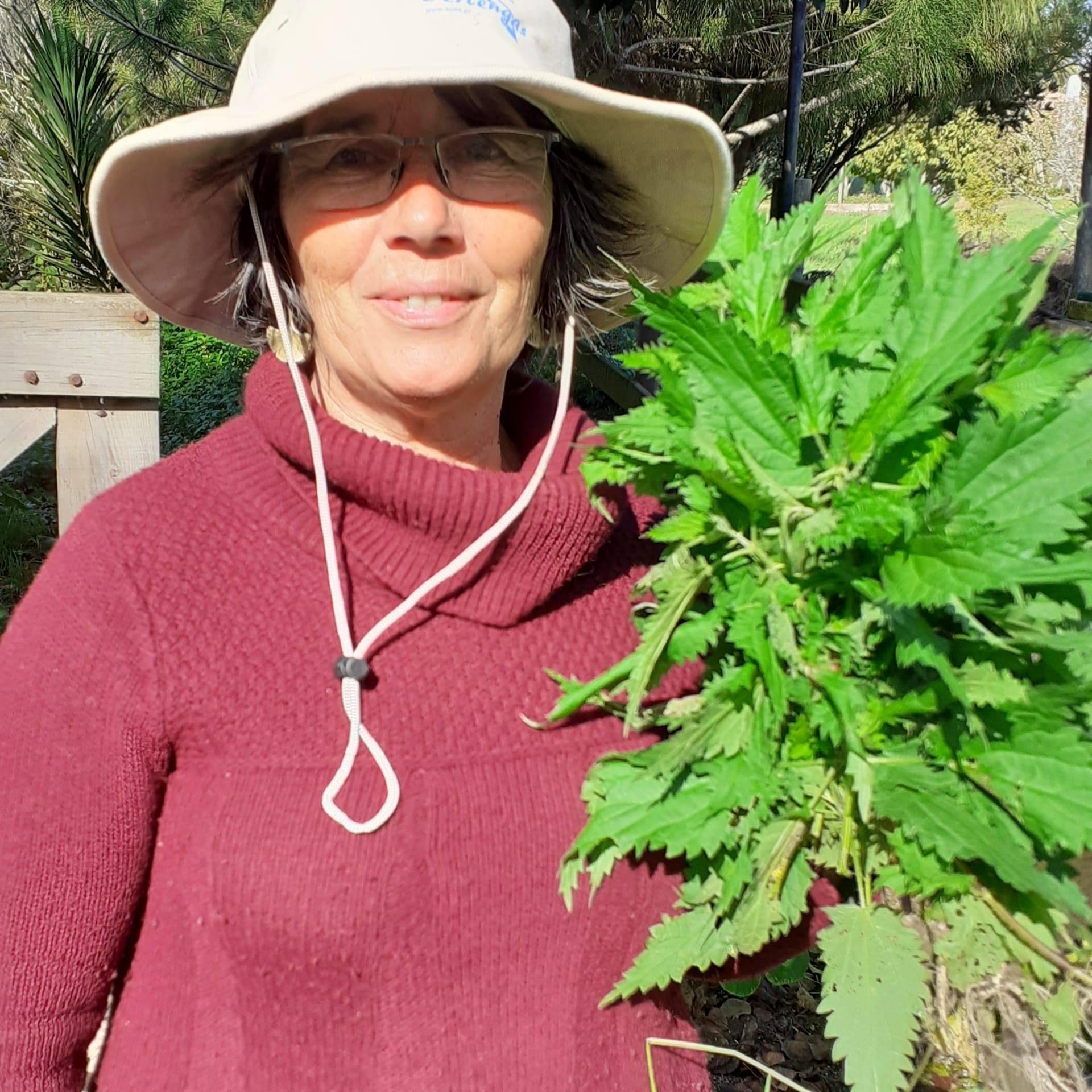 Ervas Silvestres Comestíveis
