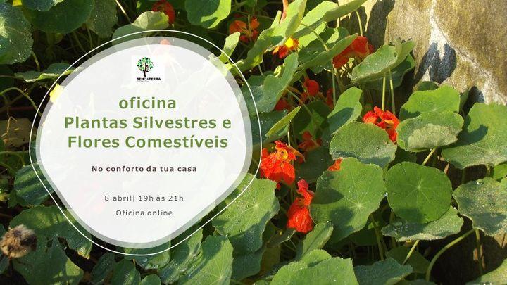 Oficina de Plantas Silvestres e Flores Comestíveis