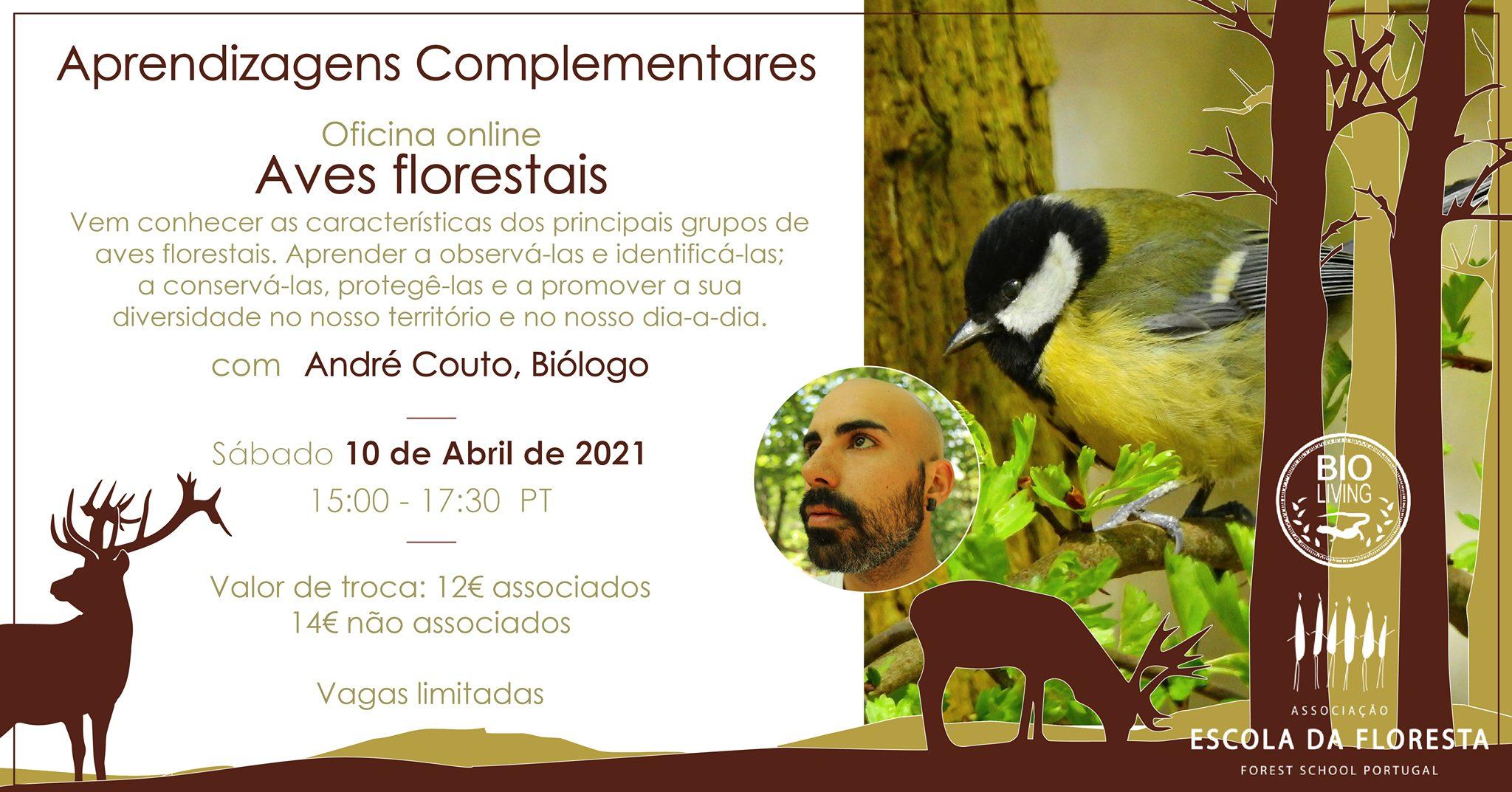 Oficina Online - Aves Florestais