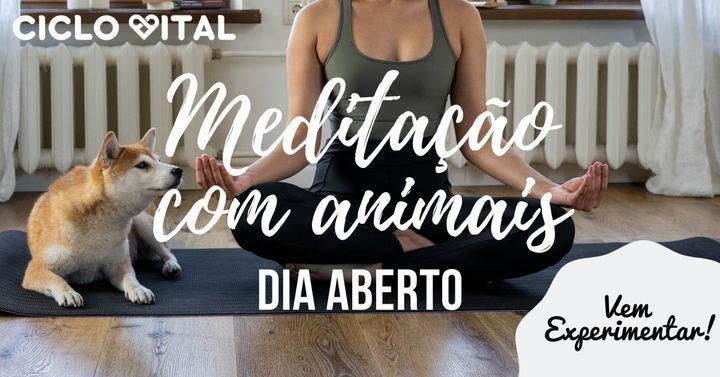 Meditação com animais - dia aberto