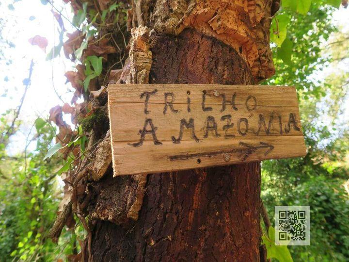 Caminhando no Trilho da Amazónia